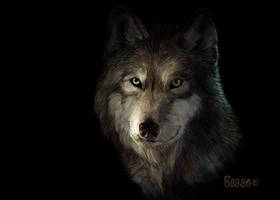 wolf's head by Hagge