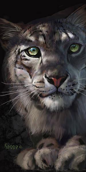 snow leopard III