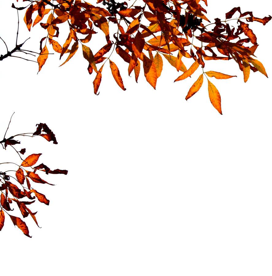 Fall 2014 by b-j-g
