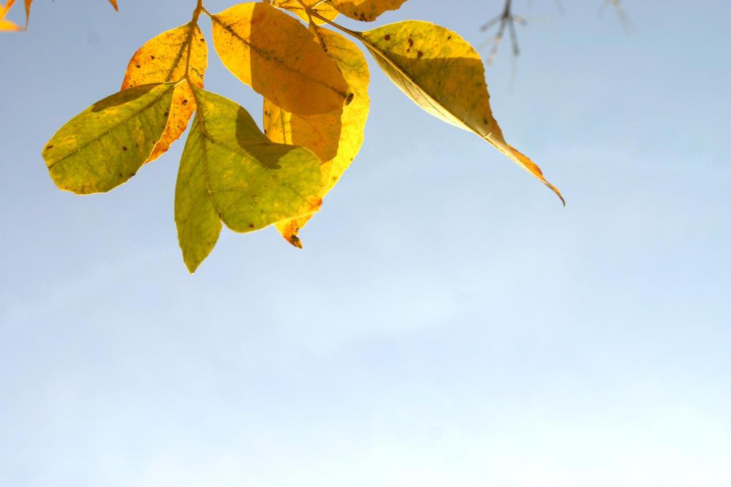 Fall 2014 (3) by b-j-g