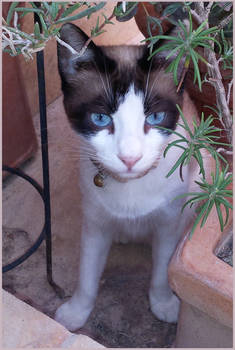 Got Blue Eyes