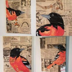 Oriole Acrylic Paintings on Collage