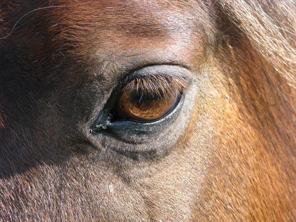 Angel Eye by okbrightstar-stock