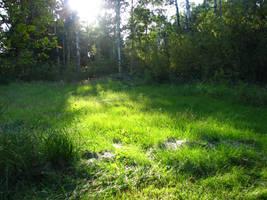 Forest Landscape 14 by okbrightstar-stock