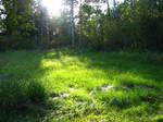 Forest Landscape 14