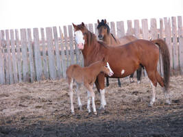 Mare and Foal 5 by okbrightstar-stock