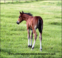 Friendly Mare Foal 4 by okbrightstar-stock
