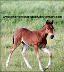Friendly Mare Foal 11