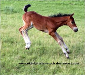 Friendly Mare Foal 13