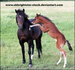 Friendly Mare Foal 14
