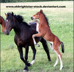 Friendly Mare Foal 15