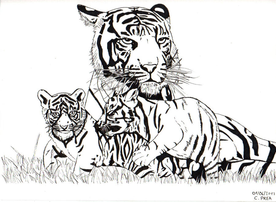 Black and White Tigers ~ by Cooki3Art on DeviantArt