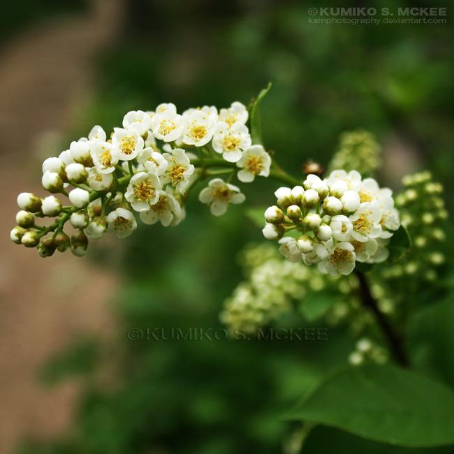 Wild Flower 7