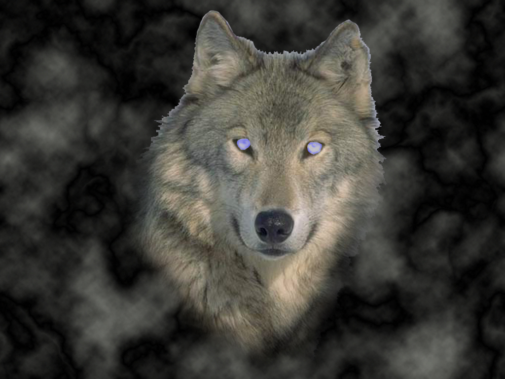 Black Wolf Hybrid With Blue Eyes