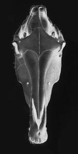 luvHORSESandMUSIC's Profile Picture