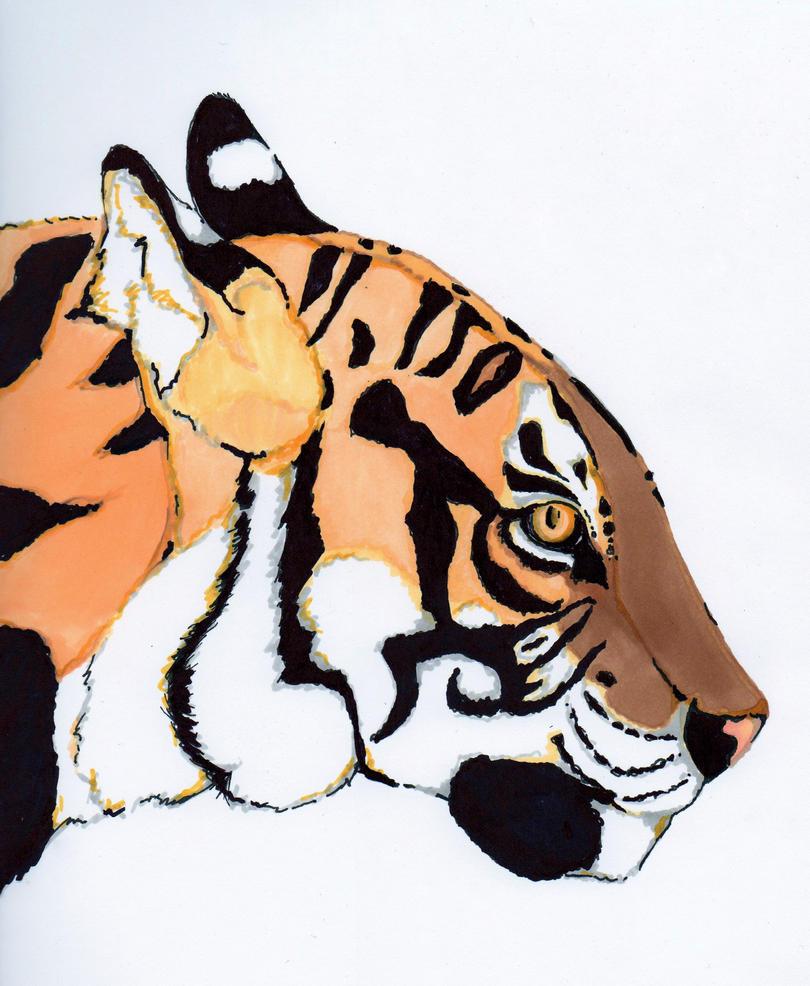 Tiger's Face by Tebyx on DeviantArt
