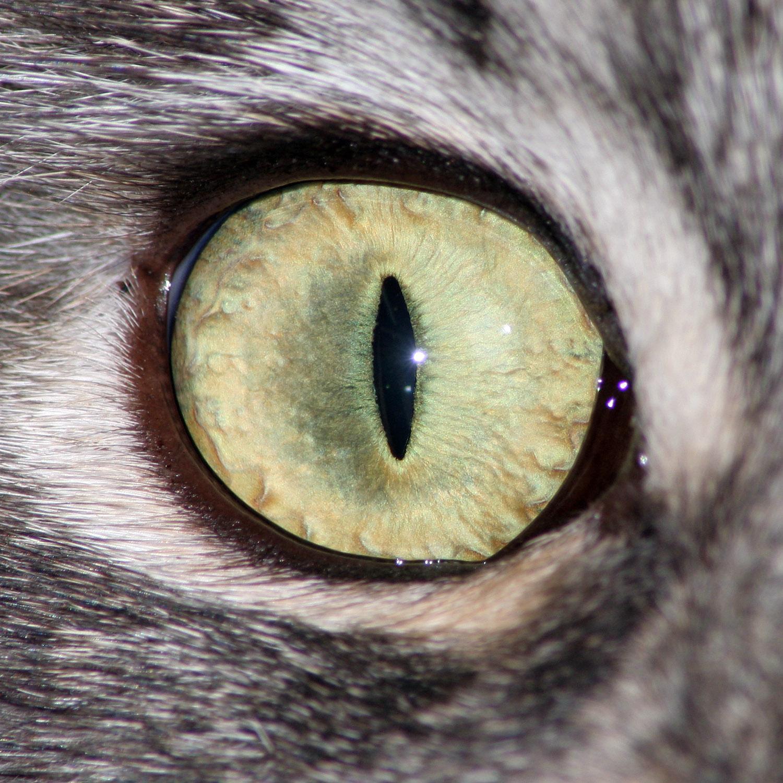Как сделать глаза кота в фотошопе