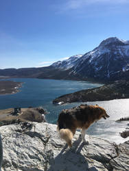 Adventure Doggo