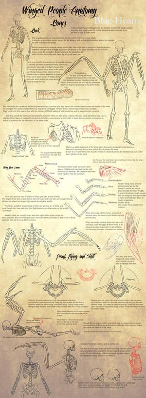 Winged People Anatomy: Bone Structure.