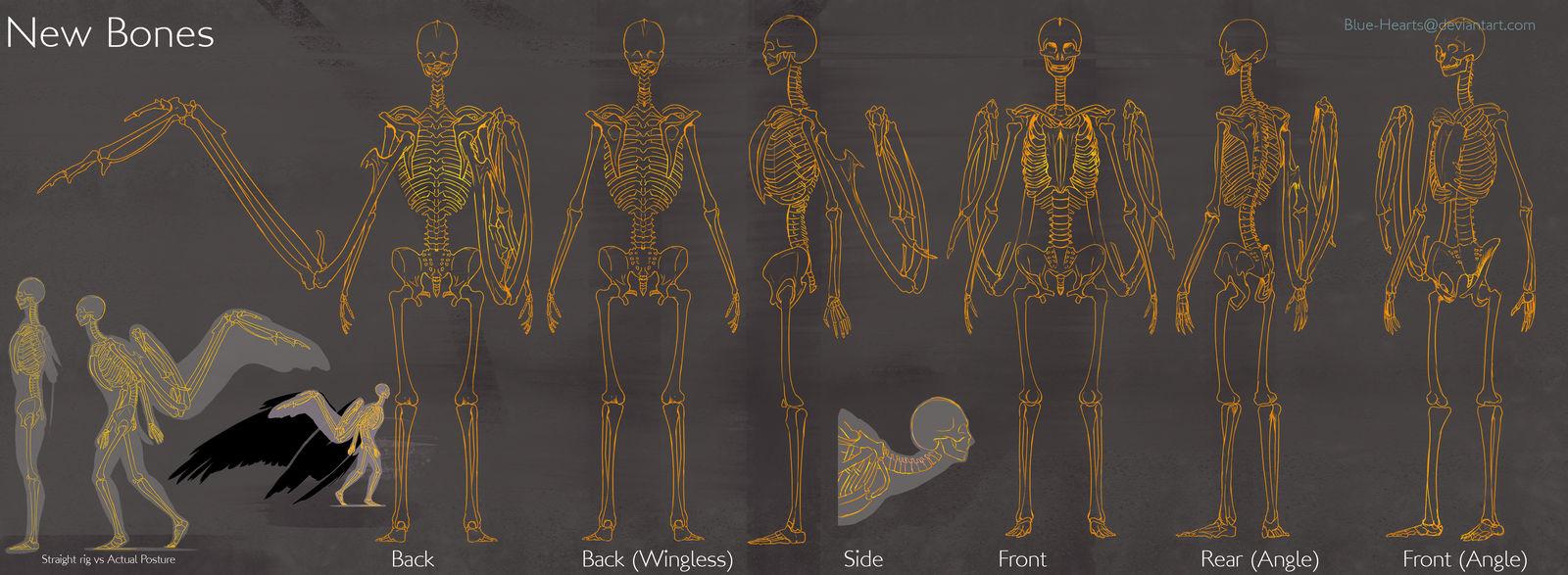 SB: New Bones