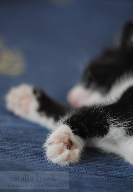 Sweet paws by Drocco