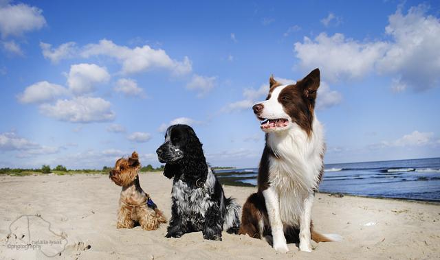 Summer dog by Drocco