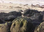 Bird on the rocks