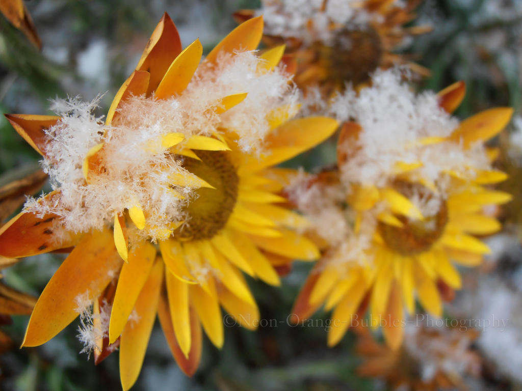 Flutter down by NeoN-orange-Bubbles