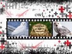 owl points commish