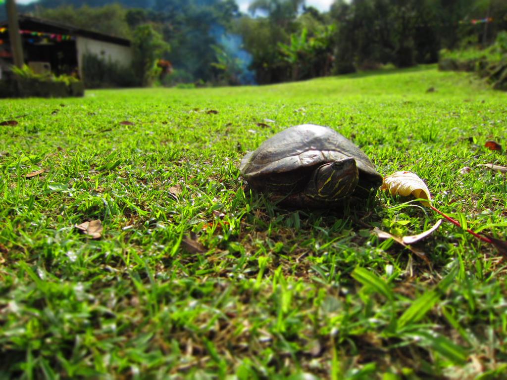 Ninja turtle by lykawildmoon