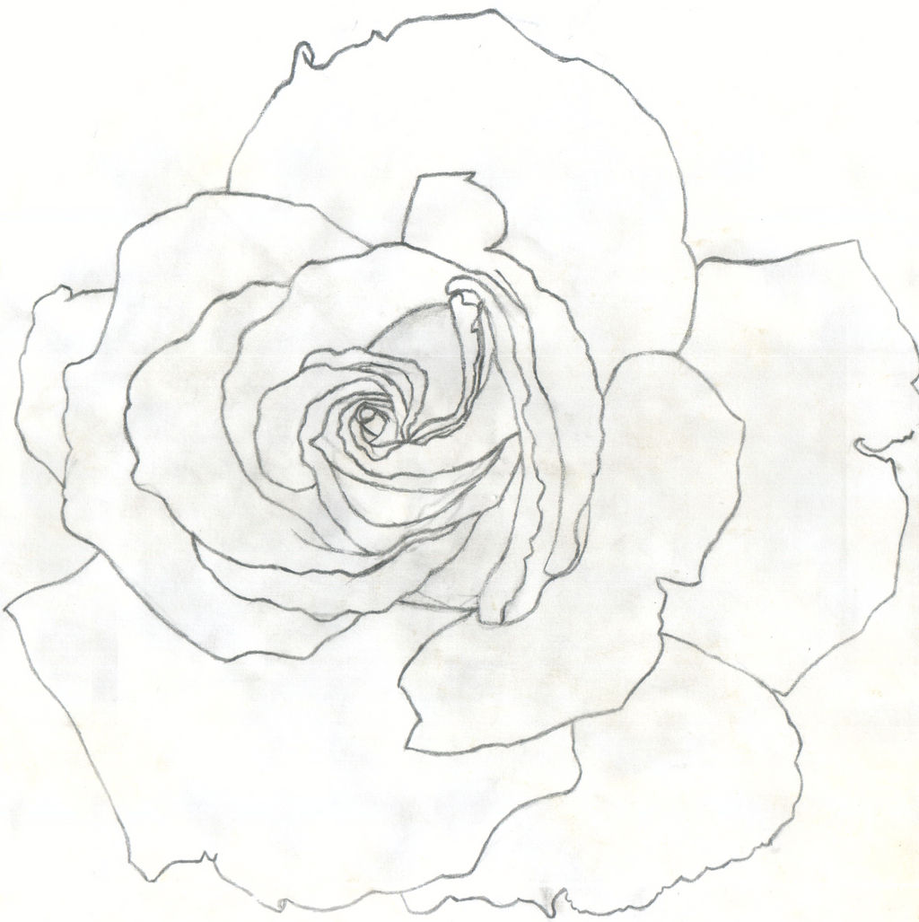 Rose by Saltome