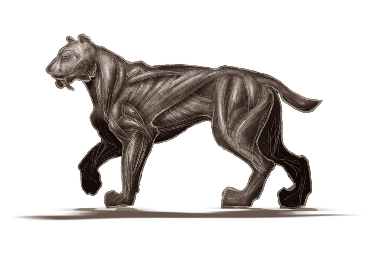 Anatomy of a Sabre Tooth by cptn-awesomeshorts on DeviantArt