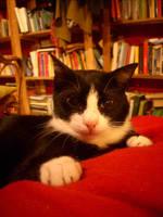 INTELLECTUAL CAT by bluesse