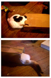 THE BOX WITH THE TAIL