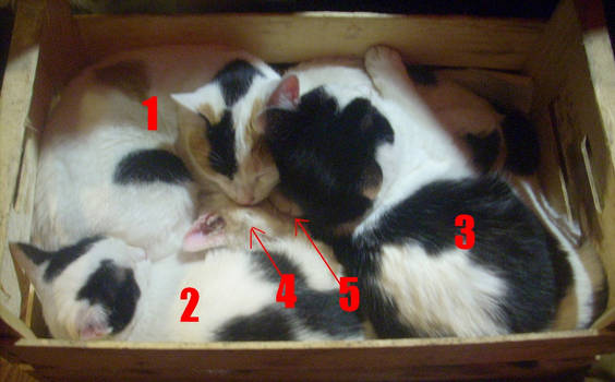 5 CATS IN THE BOX