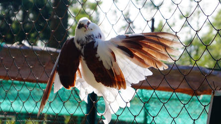 Pigeon in zoo by Wings-Of-North