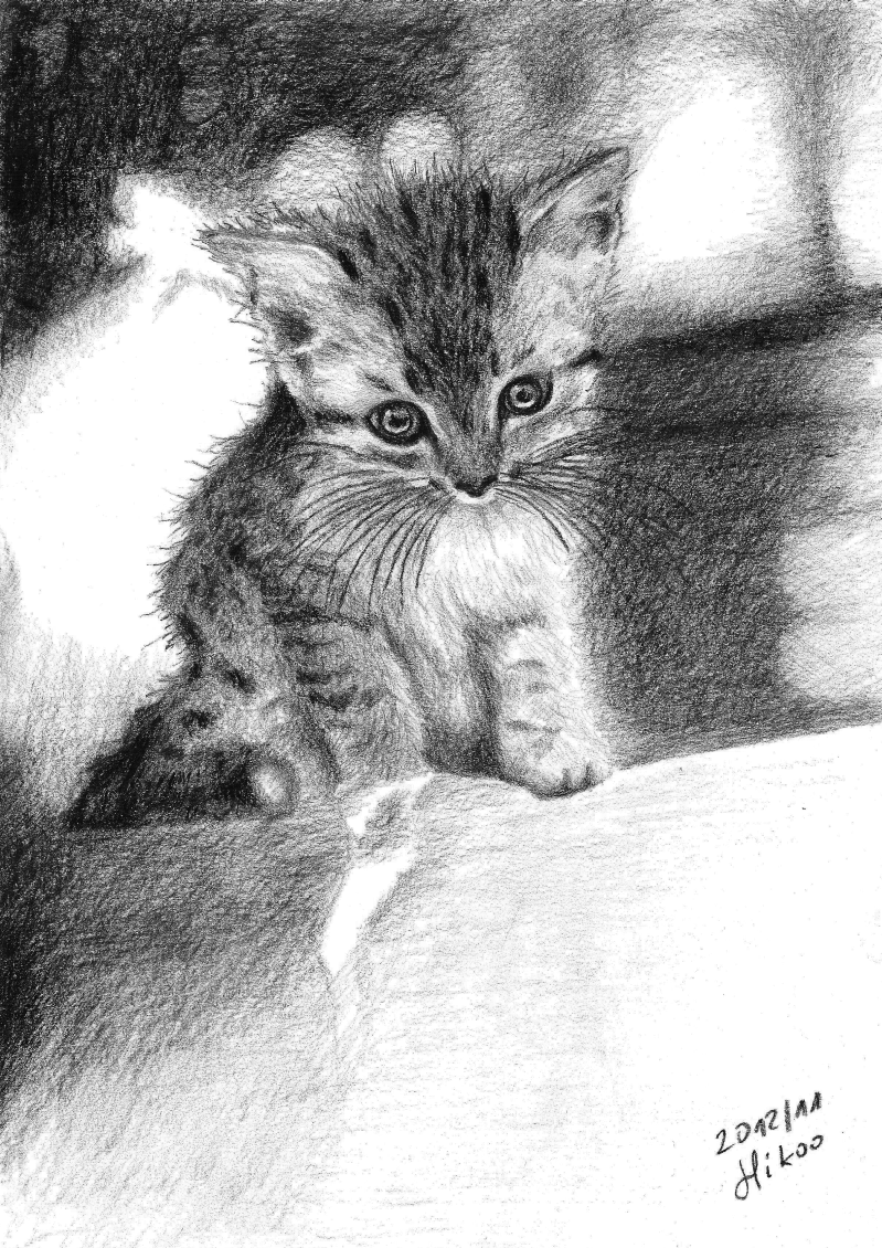 Kitty by hikoo