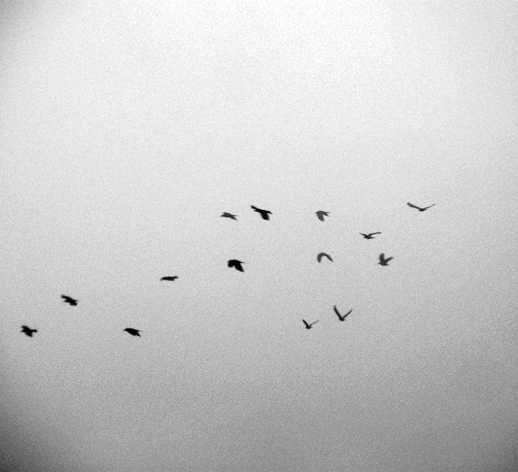 Birds by Papierowemaki