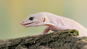 178.Gecko by Bulinko