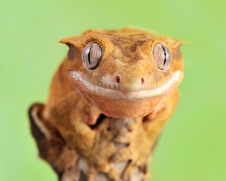 179.Gecko by Bulinko