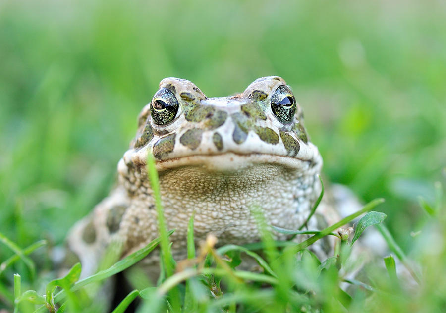 Frogg by Bulinko