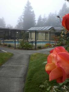 fog beyond the pool
