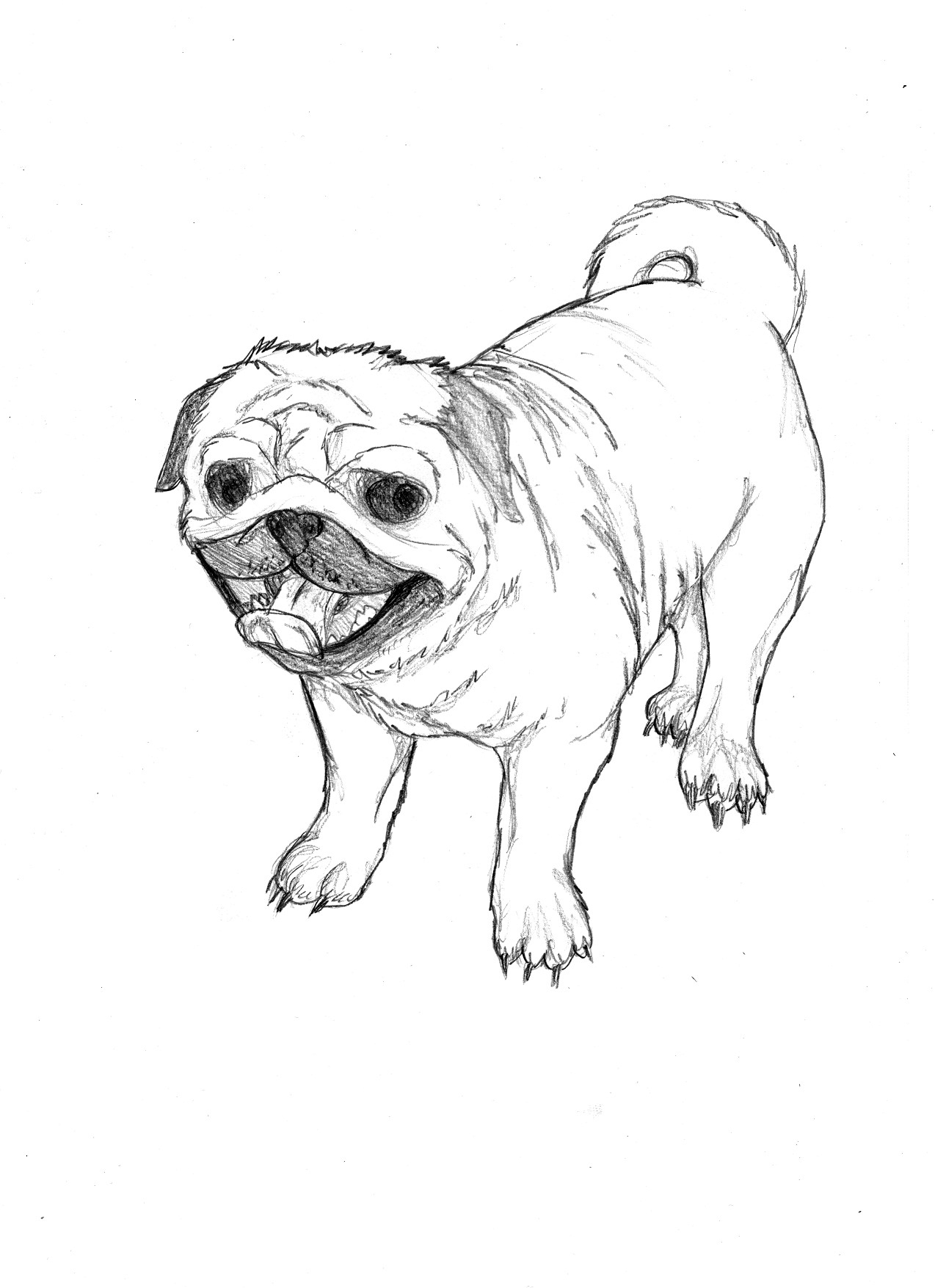 Free printable coloring pages pugs - Coloring Pages Pug Coloring Pages Pug Coloring Pages Printable Futpal Com 1000 Images About Pugs On
