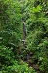 Jungle 3