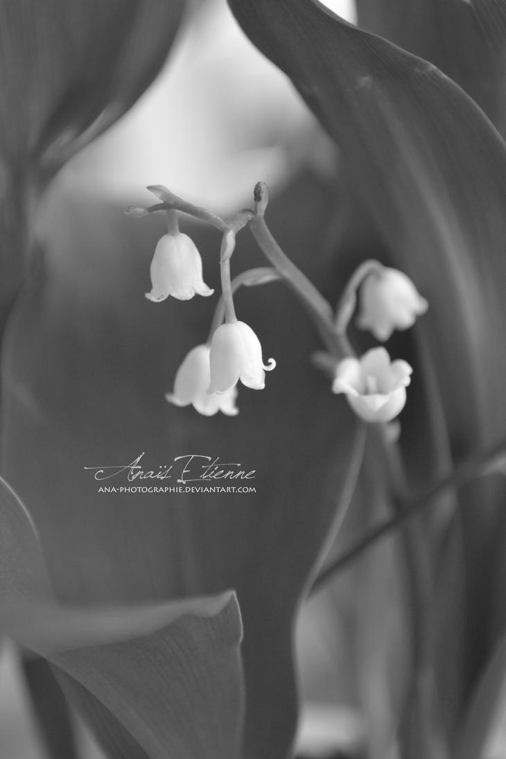 Lily of the valley by Ana-photographie