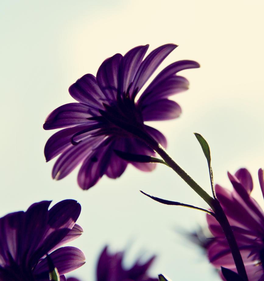 Purple flower by benjic6 on DeviantArt