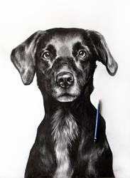 Dog by Walyco