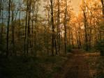 Autumn Forest Stock