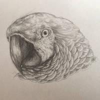 Parrot by TeaFoxRabbit