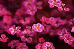 Floral Nation